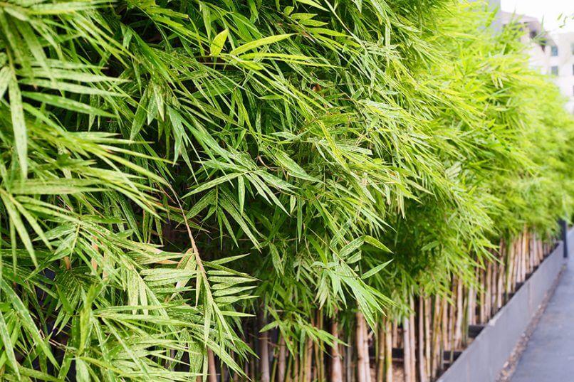 Bamboe verwijderen is een lastige klus, Buitenleven zoekt uit hoe
