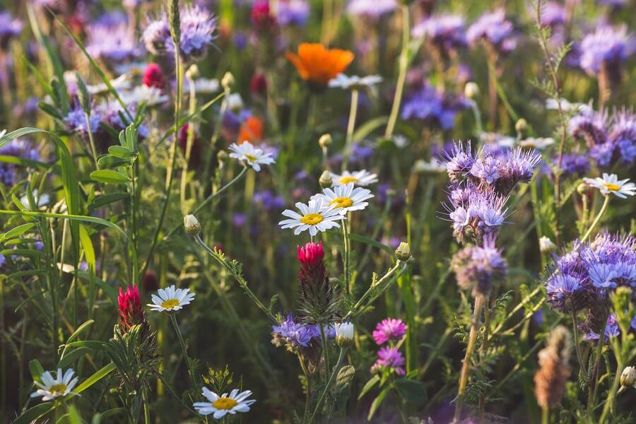 Bijen helpen in de tuin - Tuinieren voor de insecten met Buitenleven