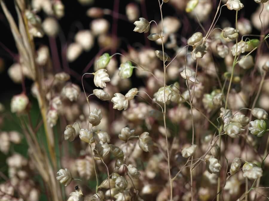 Tips over siergras snoeien – tuinieren met Buitenleven