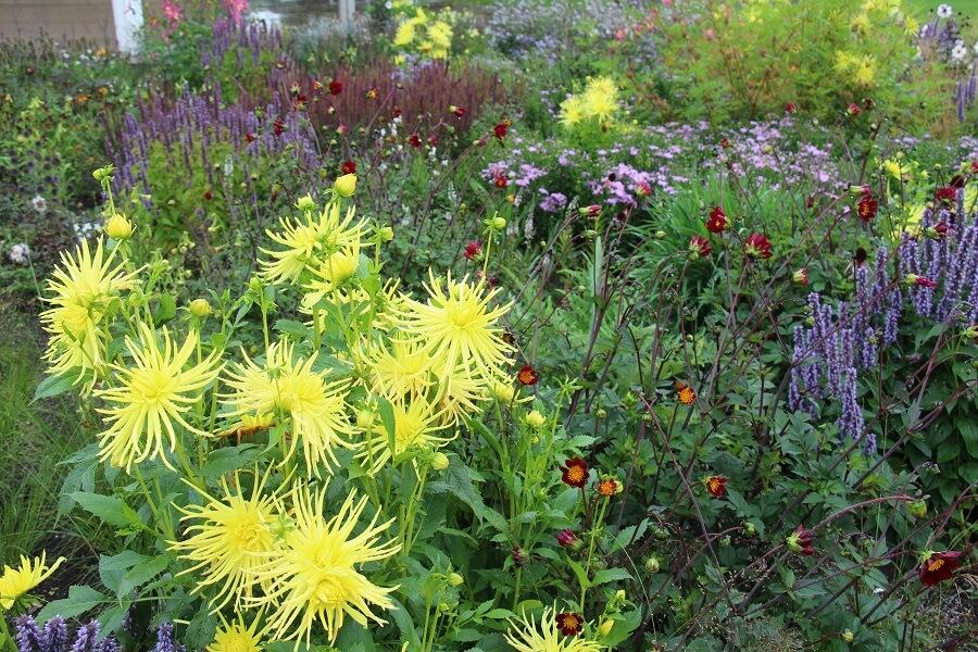 Openbare tuinen bezoeken doe je om inspiratie op te doen - Eropuit met Buitenleven