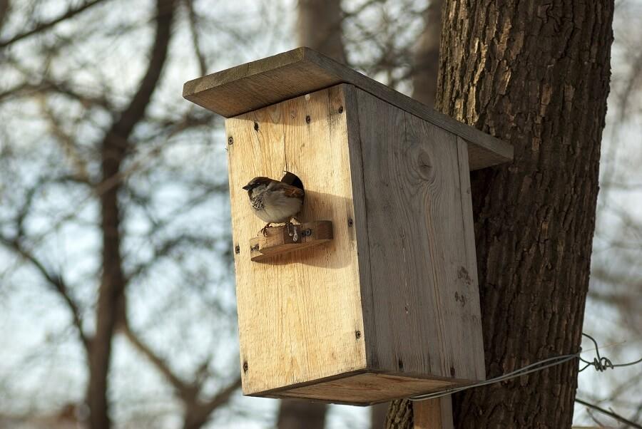 Vogelhuisje schoonmaken doe je het beste in de herfst - Tuinieren met Buitenleven