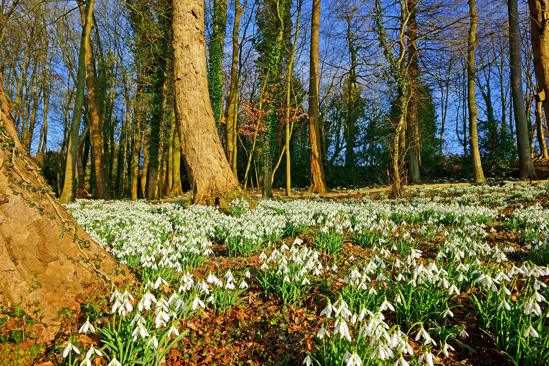 In het voorjaar schieten de sneeuwklokjes uit de grond. 10x bijzondere sneeuwklokjes kijken op een rij – Eropuit met Buitenleven