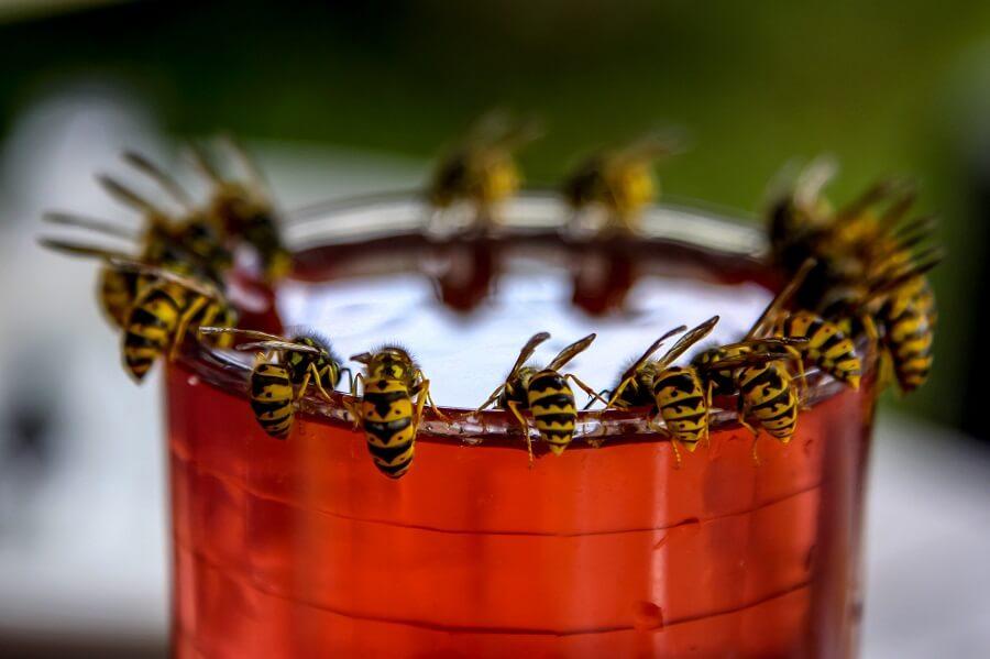 Wespen verjagen op een natuurlijke manier - Buitenleven