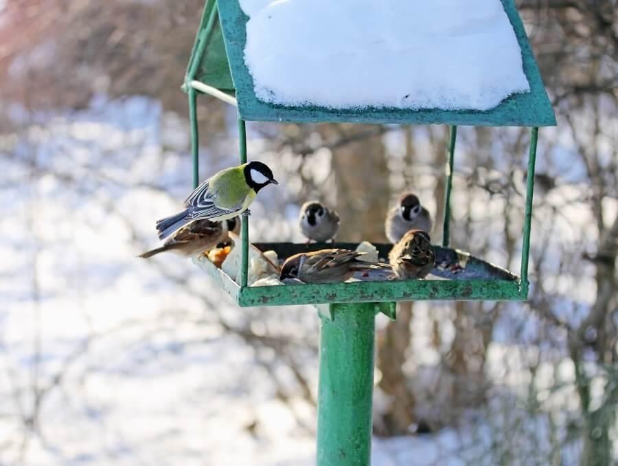 Vogels voeren in de winter - Praktische tips voor tuinvogels - Vogels met Buitenleven