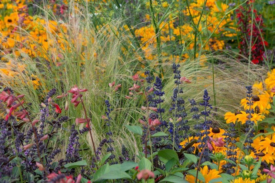 Zeven insectvriendelijke laatbloeiers die kleur geven aan september – tuinieren met Buitenleven.