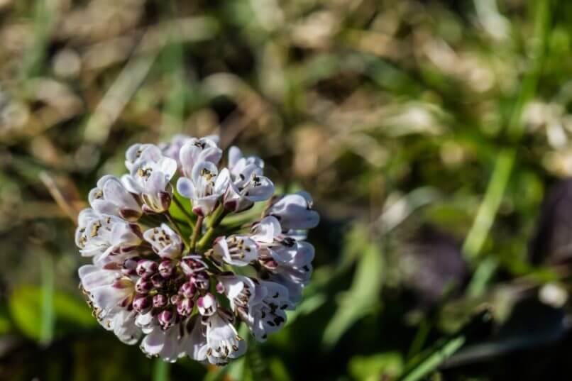Wilde bloemen top 5 voor april en mei – Buitenleven magazine