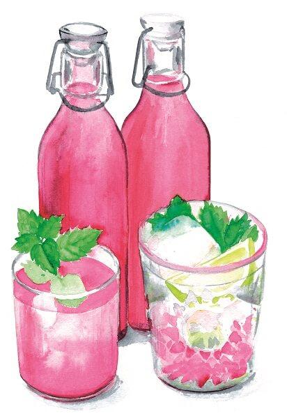 Tanja deelt haar recepten met kruiden op geïllustreerde kaarten. Illustratie: Tanja Hilgers