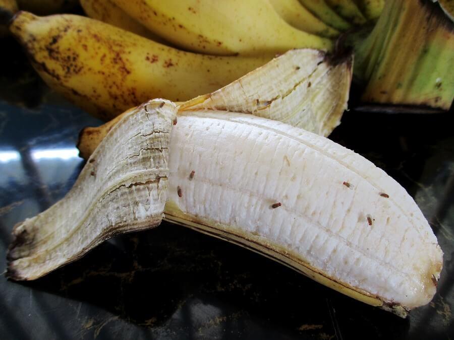 Fruitvliegjes bestrijden is een lastige klus, zelfs met azijn, siroop en afwasmiddel. Voorkomen is beter – tips van Buitenleven