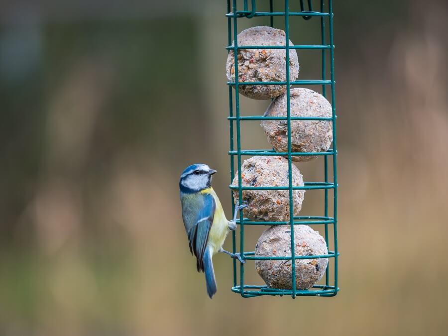 Vogels voeren: vetbollen in plastic netjes kunnen gevaarlijk zijn voor vogels. Een rekje voor vetbollen is beter - Tuinieren met Buitenleven