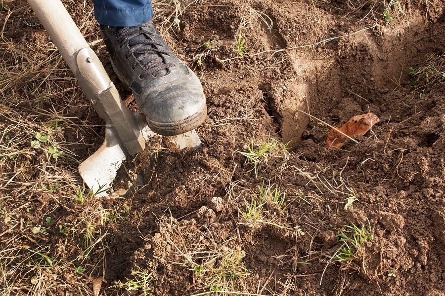 Je eigen gazon zaaien doe je met graszaad, in het voorjaar vanaf maart – Tuinieren met Buitenleven
