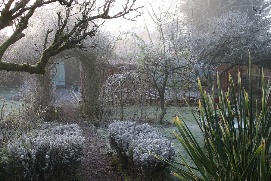 In december kun je nog een aantal tuinklussen doen in de tuin - tuinieren met Buitenleven