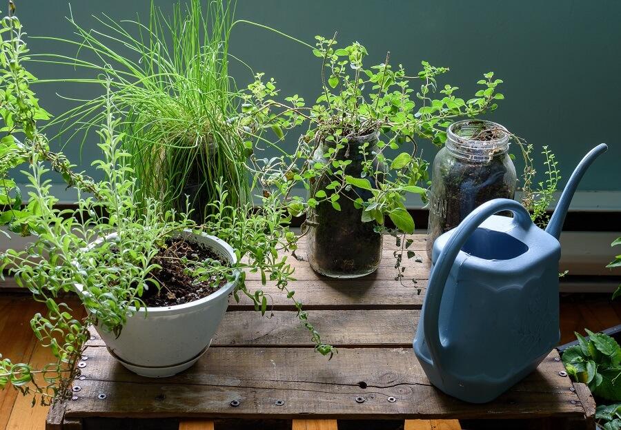 Buitenleven magazine zocht verschillende apps voor je planten en je tuin