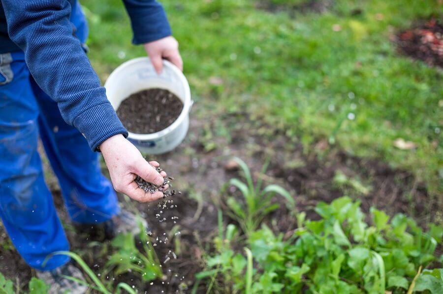 Tips om je gazon te bemesten – Tuinieren met Buitenleven