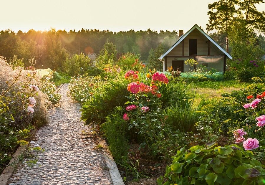 Tuintips voor augustus: zorg voor verkoeling, snoei en maai – Tuinieren met Buitenleven