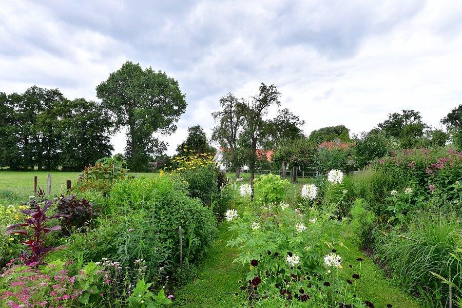 Wandelpaden van gras leiden bezoekers tussen de bloemen door. Foto: Sietske de Vries