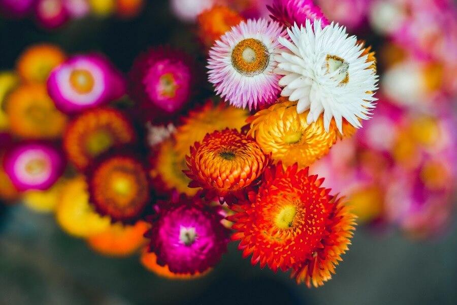 5 bloemen om te drogen: zo bewaar je de zomer – Buitenleven magazine